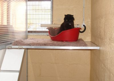 cattery 005